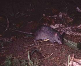 Мръсна нация сме, мишките ни ядат!