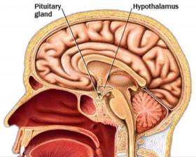 хипофизна жлеза