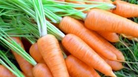 морков без нитрати