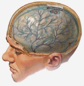 хроничен менингит