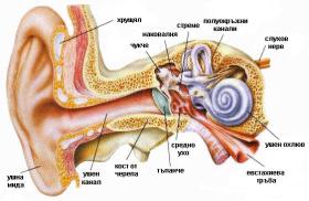 рак на ухото