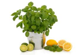 Pure-Cool-Citrus-Basil-Fragrance-oil__88683.1443037739.1280.1280