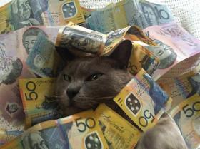 cash_cats_15