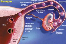 Кървене между менструация