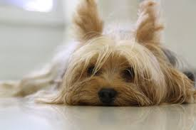 3 невероятни неща във вашето куче, за които не подозирате