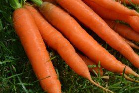 Диета с моркови