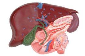 Кои храни са полезни, за да имаме здрав черен дроб?