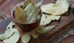 bay-leaf-dafinov-list1