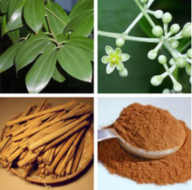 Cinnamon: how to breed it home?