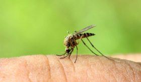 предпазване от комари