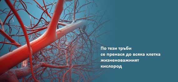 sudove-01
